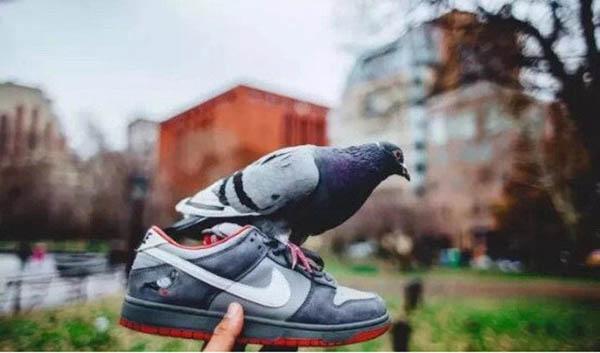 Staple Pigeon × Nike SB Dunk Low
